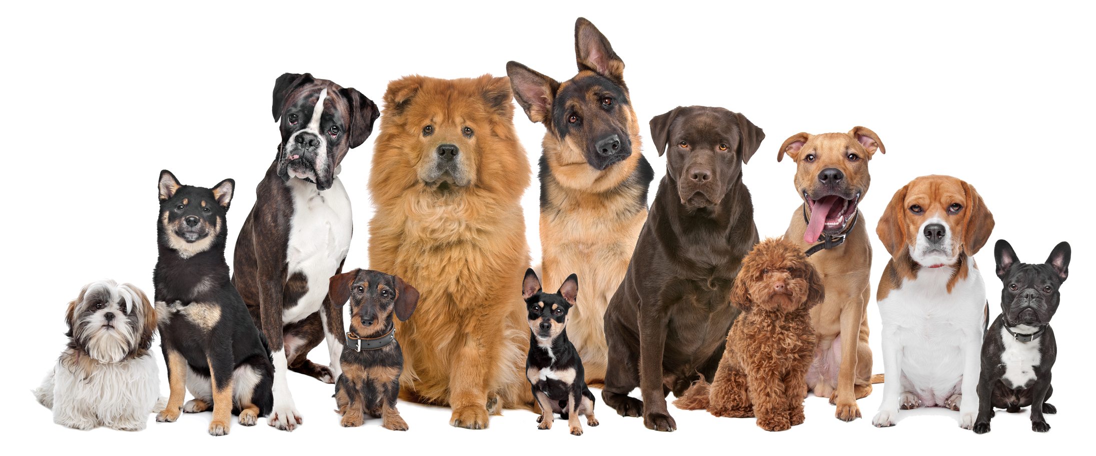Top 25 Most Intelligent Dog Breeds In The World